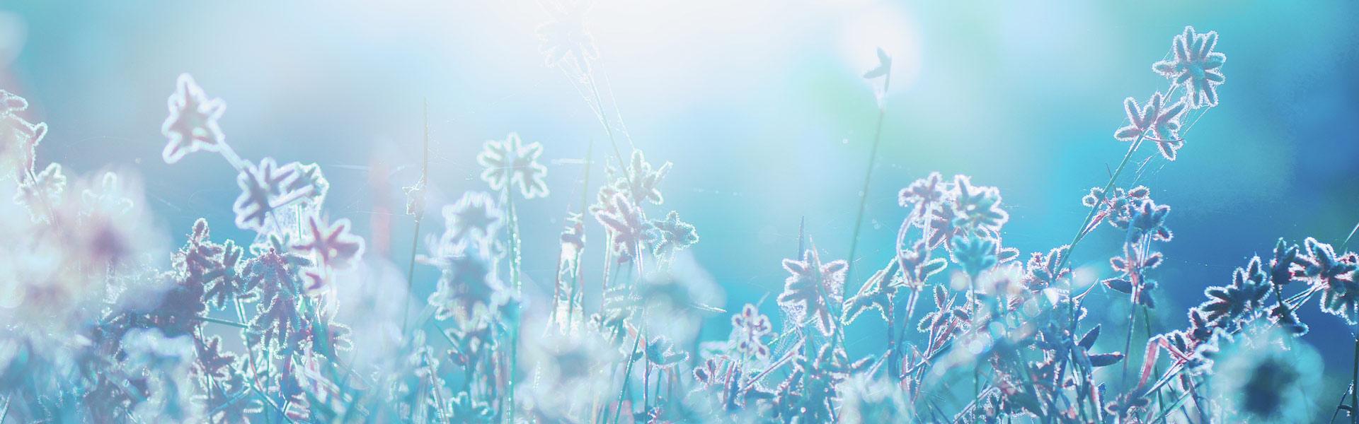 Trauma-Koerperarbeit-Silke-Joerns-Slide09-Eisblume-blau